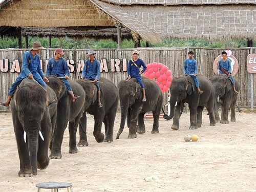 Hua Hin Safari & Adventure Park